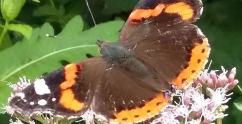 Les insectes dans votre jardin/biodiversité